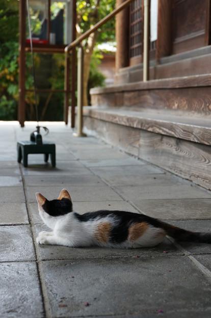 三毛の子猫