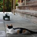 Photos: 三毛の子猫