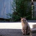 Photos: 猫が見ていた