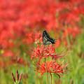 写真: 蝶も舞う