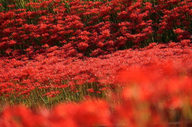 Photos: 赤い波
