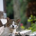 写真: くつろぐ猫