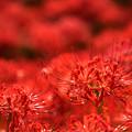Photos: 花は花