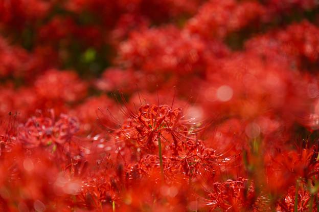 Photos: 花の中