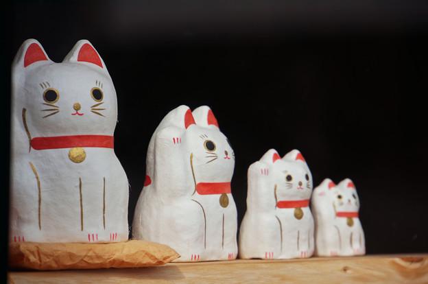 Photos: 猫リョーシカ?