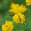 写真: 初秋の花