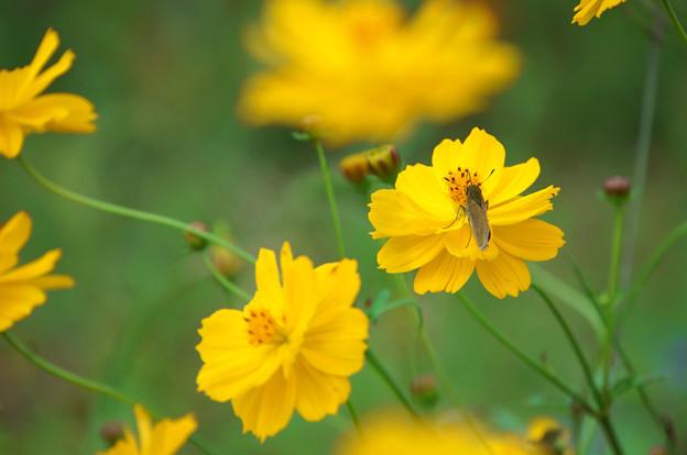 秋の花にとまれ