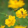 写真: 秋の花にとまれ