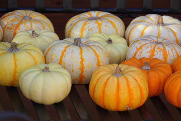 かぼちゃ色々