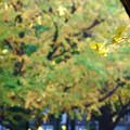 枝先に秋が灯る
