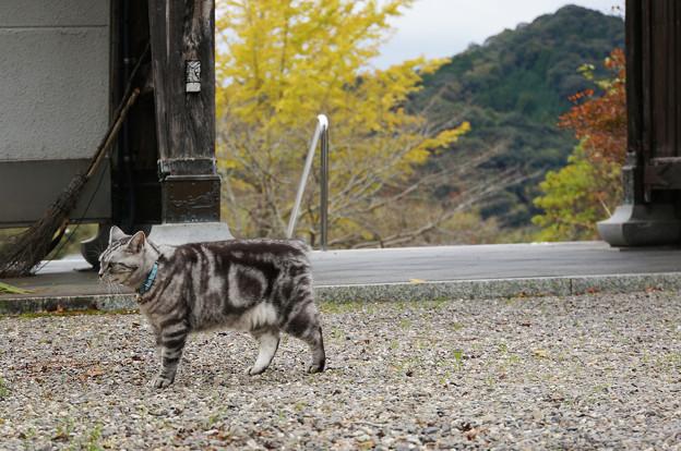 秋と寺と猫