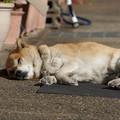 Photos: 寝落ちる