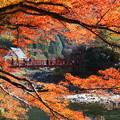 写真: 秋を渡る