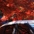 Photos: 紅葉を乗せて
