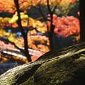 Photos: 苔と紅葉