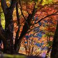 Photos: 季節の向こうへ