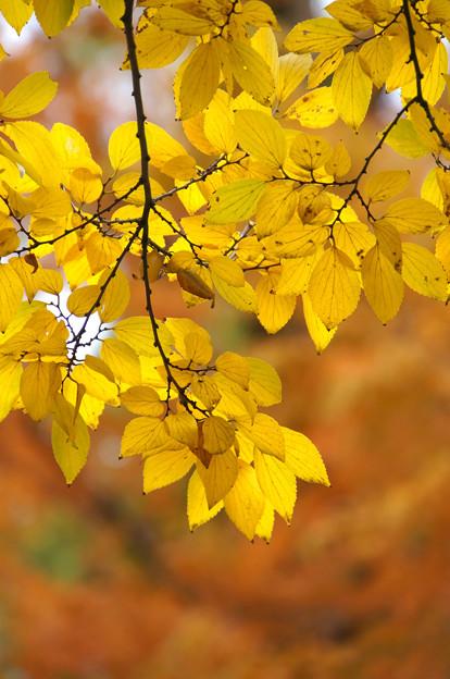 お日様色の季節