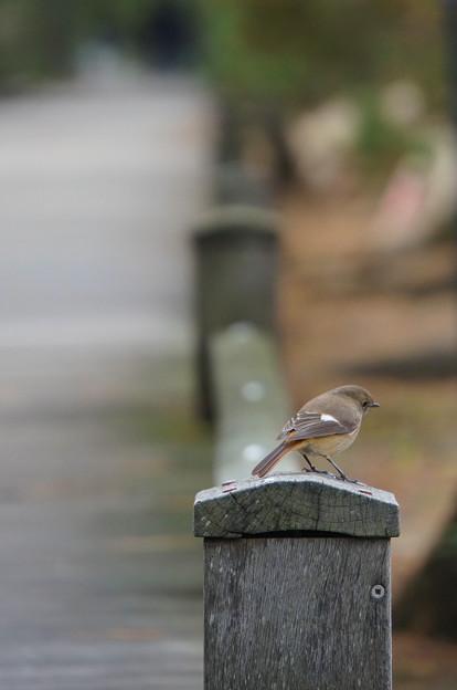 神の道に住まう鳥