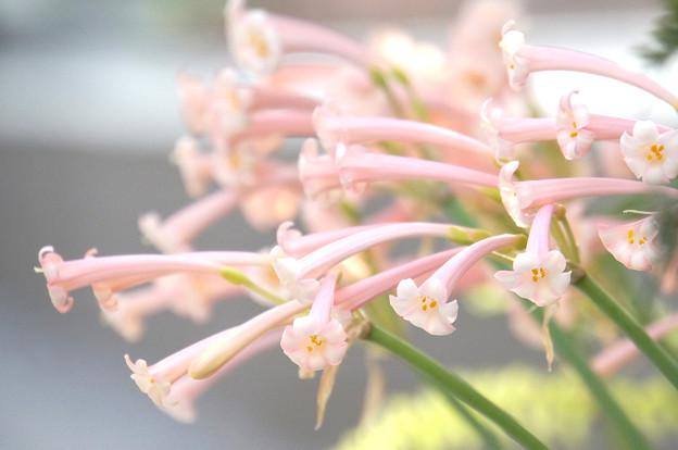 春いろの花