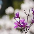 Photos: 春の瞬き