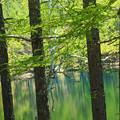 Photos: 新緑の林