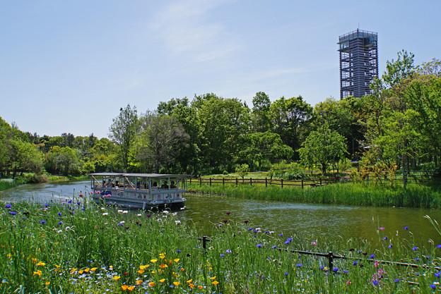 新緑の川辺