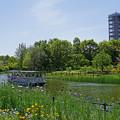 Photos: 新緑の川辺