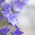 Photos: 紫の星