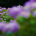 Photos: 花の群れ
