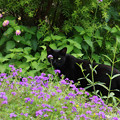 Photos: 花に潜む