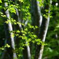 Photos: 緑の光