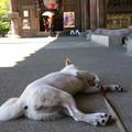 Photos: 寝る犬
