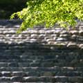 石段と青紅葉