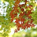 Photos: 秋を先取り