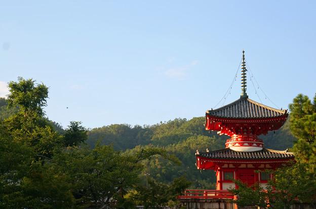 Photos: 西日の塔
