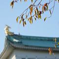 Photos: 秋の金鯱