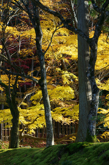 Photos: 木の間から
