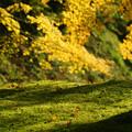 Photos: 金色の光