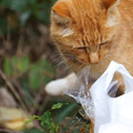 Photos: 泥棒猫