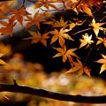 Photos: 紅葉日和