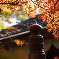 Photos: 欄干と紅葉