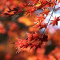 Photos: 秋色を重ねて