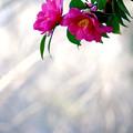 Photos: 俯く花