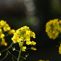 Photos: 春を待ちきれず