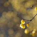 Photos: 黄色の世界