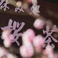 Photos: 桜待つ