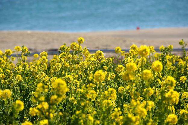 黄色と水色
