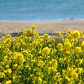 Photos: 黄色と水色
