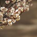 Photos: 春日