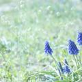 Photos: 春の野の花